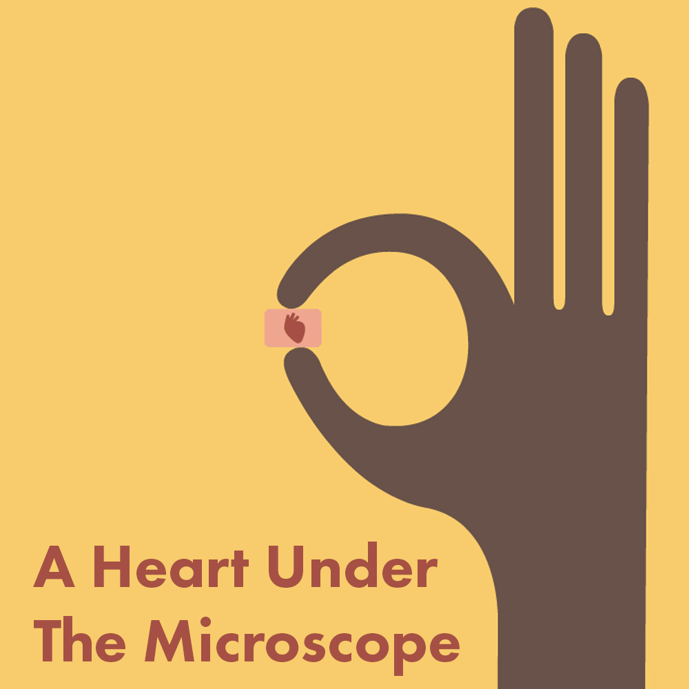 A Heart Under The Microscope